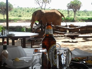 ElephantBedroomdining